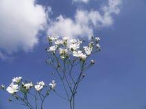Fleurs blanches sur le ciel photos stock