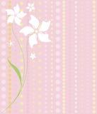 Fleurs blanches sur le rose Image libre de droits