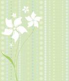 Fleurs blanches sur le vert Photo libre de droits