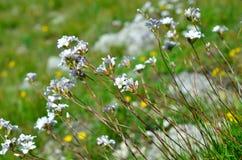 Fleurs blanches sur les tiges grandes dans le domaine Images stock