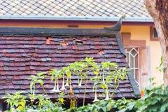 Fleurs blanches sur un fond carrelé de toit dans Louangphabang, Laos Copiez l'espace pour le texte photo stock