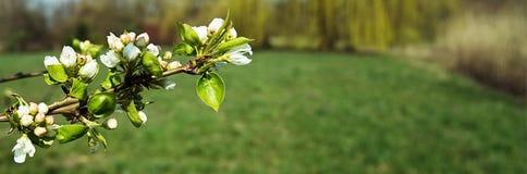 Fleurs blanches sur un fond coloré photo libre de droits