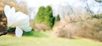 Fleurs blanches sur un fond coloré photo stock