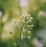 Fleurs blanches sur un fond vert Image libre de droits