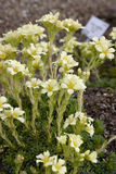 Fleurs blanches sur un parterre dans le jardin botanique Fin vers le haut Photos libres de droits
