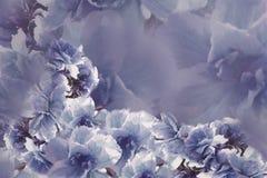 Fleurs bleu-gris-violettes de roses de vintage Drapeau des fleurs Background collage floral Composition de fleur Images libres de droits