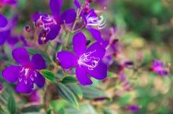 Fleurs bleues à l'arrière-plan de nature Photos libres de droits