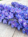 Fleurs bleues Photo stock