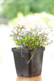 Fleurs bleues Photographie stock