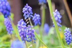 Fleurs bleues Images stock