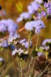 Fleurs bleues avec le fond de couleur rouge Photos libres de droits