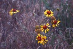 Fleurs bleues d'heure Photos libres de droits