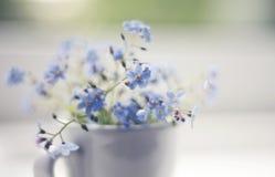 Fleurs bleues d'un myosotis dans une tasse dans une fenêtre Images stock