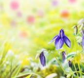 Fleurs bleues dans le jardin sur le fond jaune photographie stock libre de droits