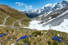 Passage de Stelvio d'été (Italie) et fleurs bleues dans l'avant. Photographie stock libre de droits