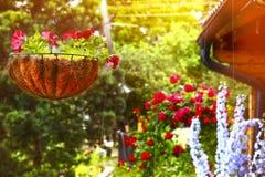 Fleurs bleues de delphinium de panier de fleur de coup de jardin photo stock