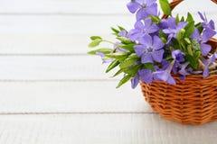 Fleurs bleues de forêt dans un panier Photos libres de droits