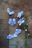 Fleurs bleues de lin textile Photographie stock