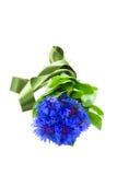 Fleurs bleues de maïs Photographie stock libre de droits