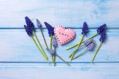 Fleurs bleues de muscaries et coeur rose décoratif sur la douleur bleue Image libre de droits