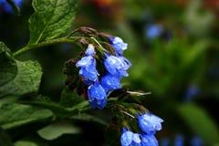 Fleurs bleues de photo, Photo stock