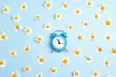 Fleurs bleues de réveil et de camomille sur le fond bleu Photos libres de droits
