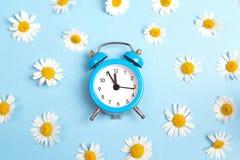 Fleurs bleues de réveil et de camomille sur le fond bleu Photo stock