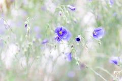 Fleurs bleues en parc qui ne fleurissent pas encore, un petit peu de tristesse, une atmosphère tranquille photo stock