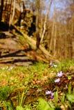Fleurs bleues et blanches par les ruines de château Photos stock