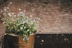 Fleurs bleues et roses Photographie stock libre de droits