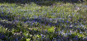 Fleurs bleues et roses Photos stock