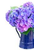 Fleurs bleues et violettes de hortensia images stock