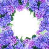 Fleurs bleues et violettes de hortensia Photographie stock libre de droits