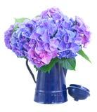 Fleurs bleues et violettes de hortensia photo libre de droits