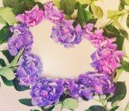Fleurs bleues et violettes de hortensia image libre de droits
