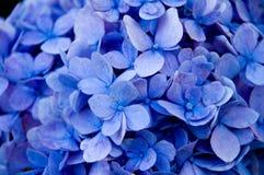Fleurs bleues - haut proche Photographie stock libre de droits