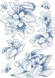 Fleurs botaniques de fleur d'illustration de vintage avec des abeilles Photos stock