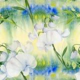 Fleurs, bourgeons, branches du pois doux Composition décorative sur un fond d'aquarelle watercolor Motifs floraux Patte sans cout Photo libre de droits