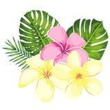 Fleurs, branches tropicales et feuilles de plumeria de rose de vecteur r?gl?es pour l'illustration florale de carte Bouquet de fl illustration de vecteur