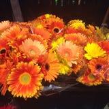 Fleurs brillantes Photographie stock libre de droits