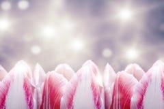 Fleurs brillantes de tulipe sur le fond coloré Image stock