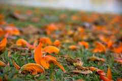 Fleurs brouillées par orange au fond Images libres de droits