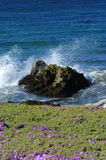 Fleurs côtières image libre de droits