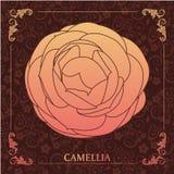 Fleurs, camélia Illustration de Vecteur