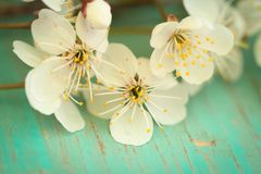 Fleurs Cherry On Old Wooden Table images stock