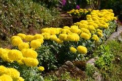 Fleurs chez Doi Pui Hmong Hill Tribe Village Doi Suthep Pui National Park thailand image stock
