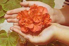 fleurs chez les mains des enfants Image libre de droits