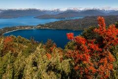 Fleurs chiliennes de firebush au-dessus de Nahuel Huapi Lake Photographie stock libre de droits
