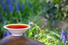 Fleurs chinoises noires de jardin de thé Images libres de droits
