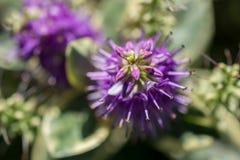 Fleurs colorées étonnantes de ressort en nature photos stock